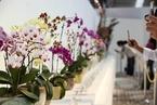 国家重点保护野生植物名录更新 兰科植物境况改善
