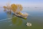 罗新:骆马湖不再,夏台不见了