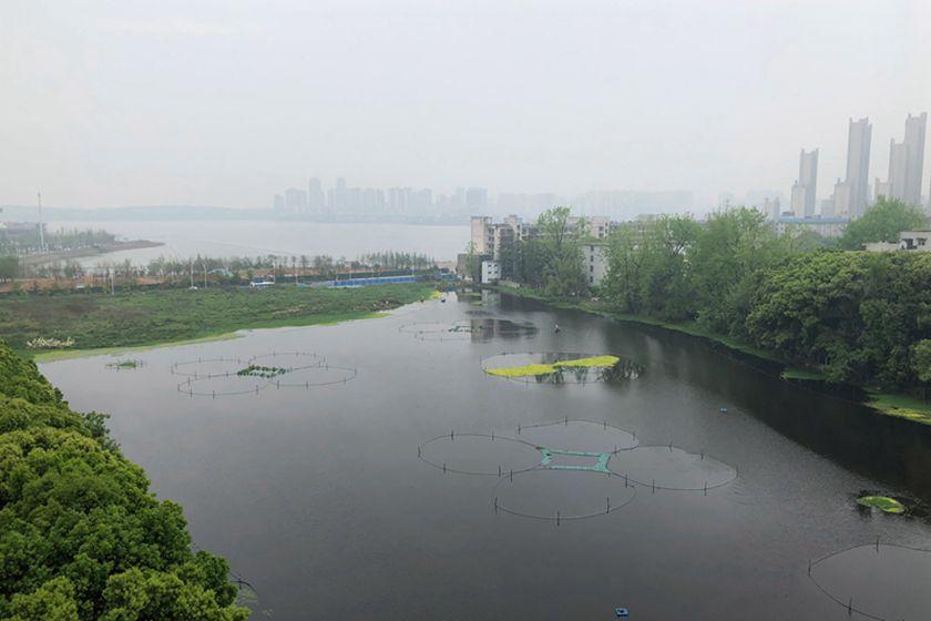 地产商拟填湖边塘盖楼 武汉市称审批合法合规
