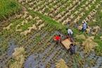 联合国呼吁重新思考现有农业补贴和支持方式