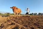 罗新:农耕、游牧、渔猎,历史社会也有歧视链