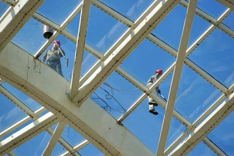 报告:建筑外墙玻璃占比与鸟撞发生频率息息相关