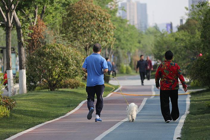 A pedestrian walks a dog on May 2 at a park of Zhengzhou, Central China's Henan province. Photo: VCG